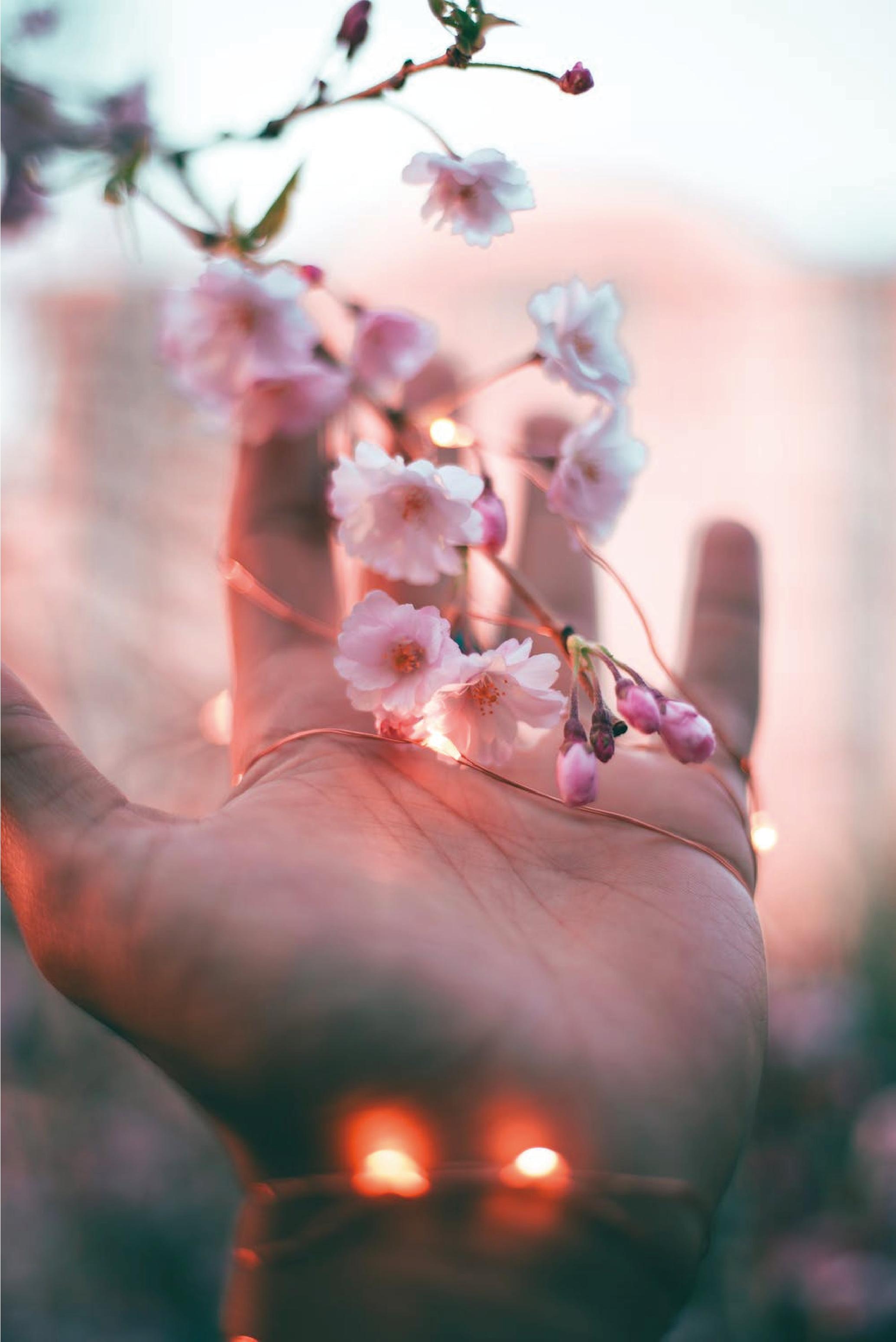 [21.03.28] 春色×芦屋暮らし 桜 TEA TIME