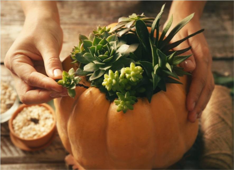 [21.09.22] Halloweenを先取り!多肉植物の寄せ植えクラフト